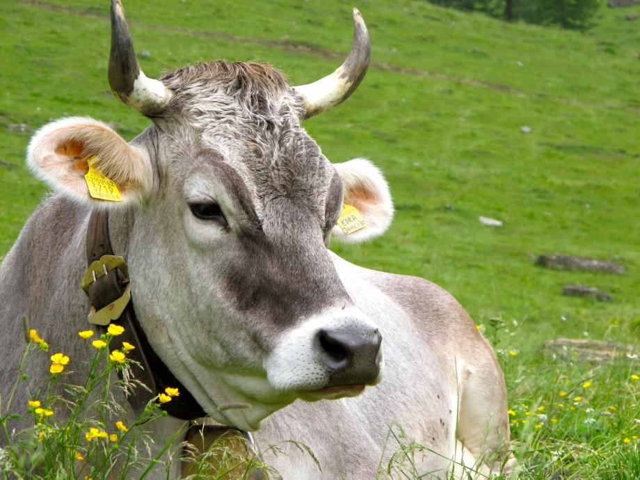 Die stillen Ecken in Südtirol