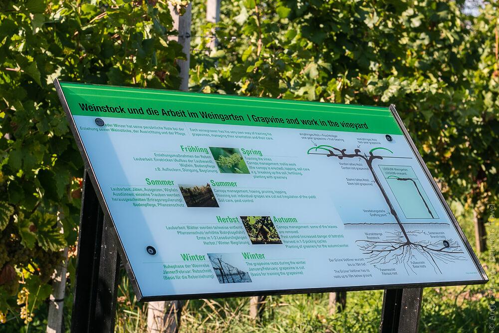 Infotafeln erklären die Arbeitsschritte im Weinberg im Loisium