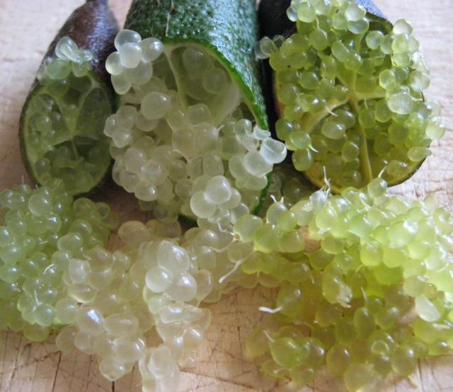 Finger Limes – Limettenkaviar