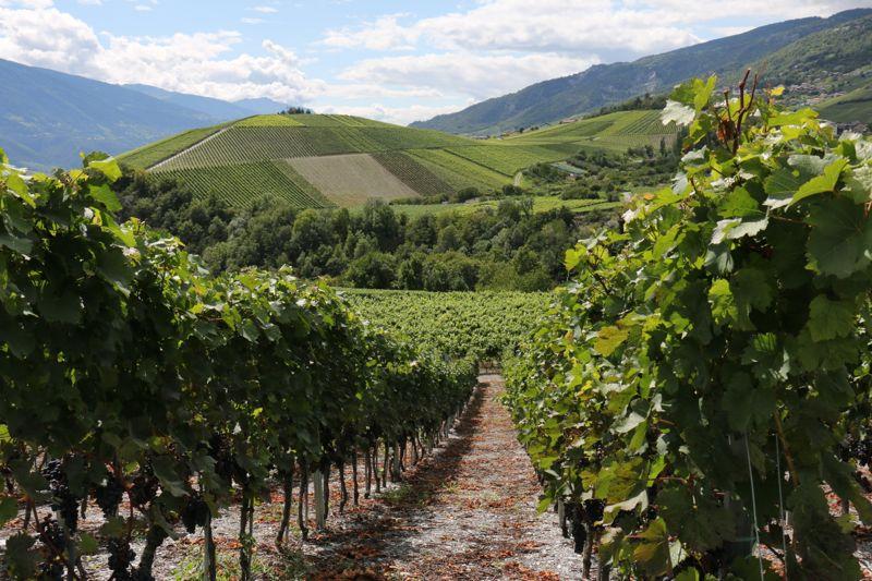 On Tour im Wallis (3): Von Salgesch nach Sierre