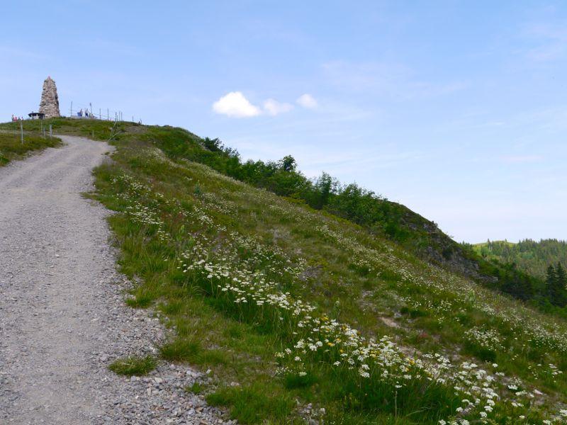 Kurz und gut: Von der Talstation der Feldbergbahn in 30 min auf den Seebuck.