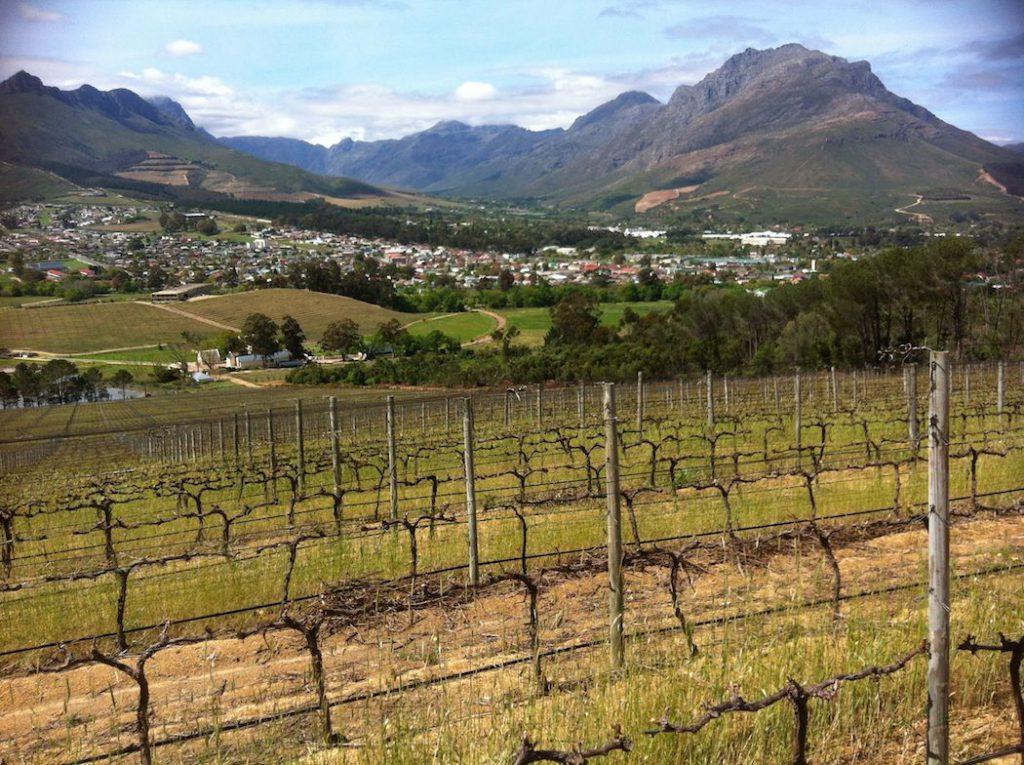Weinreisen: 5 trendige Ziele