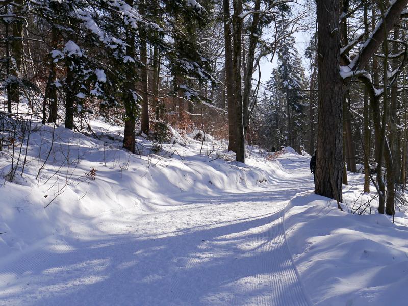 Traufgang Wintermärchen: Kurz führt der Premiumwanderweg durch den Wald.