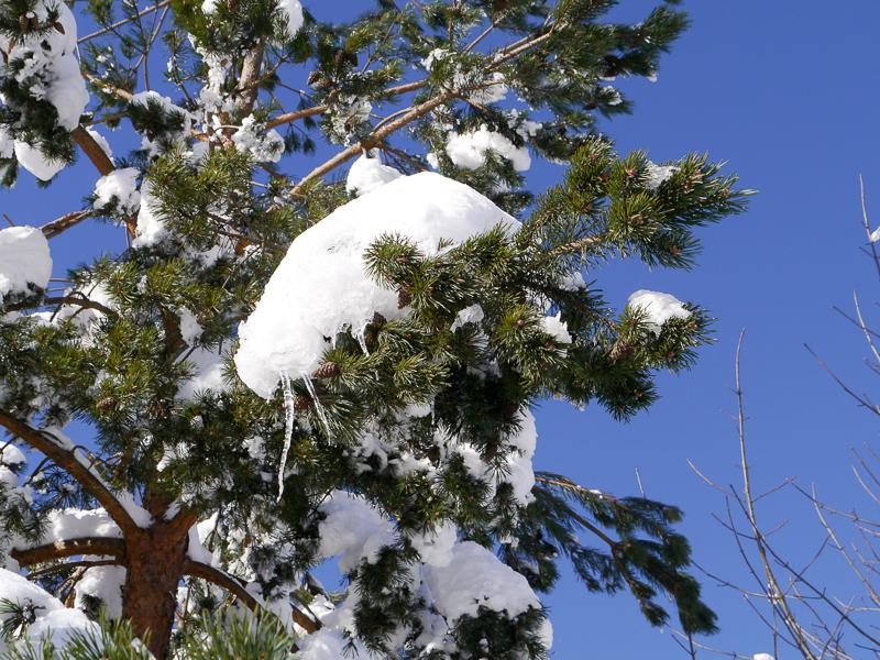 verschneite Wintermärchenwelt