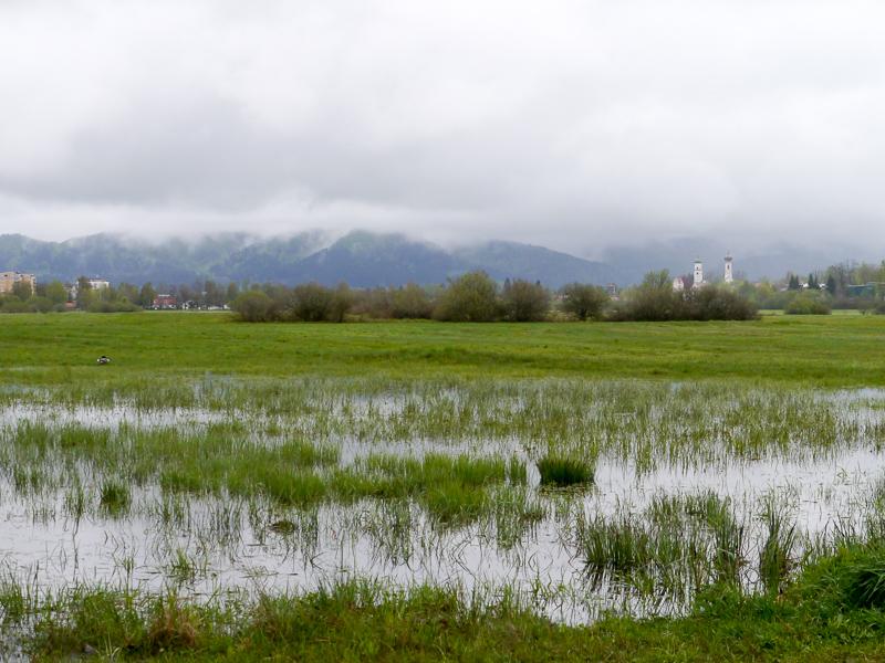 Niedermoor in Isny