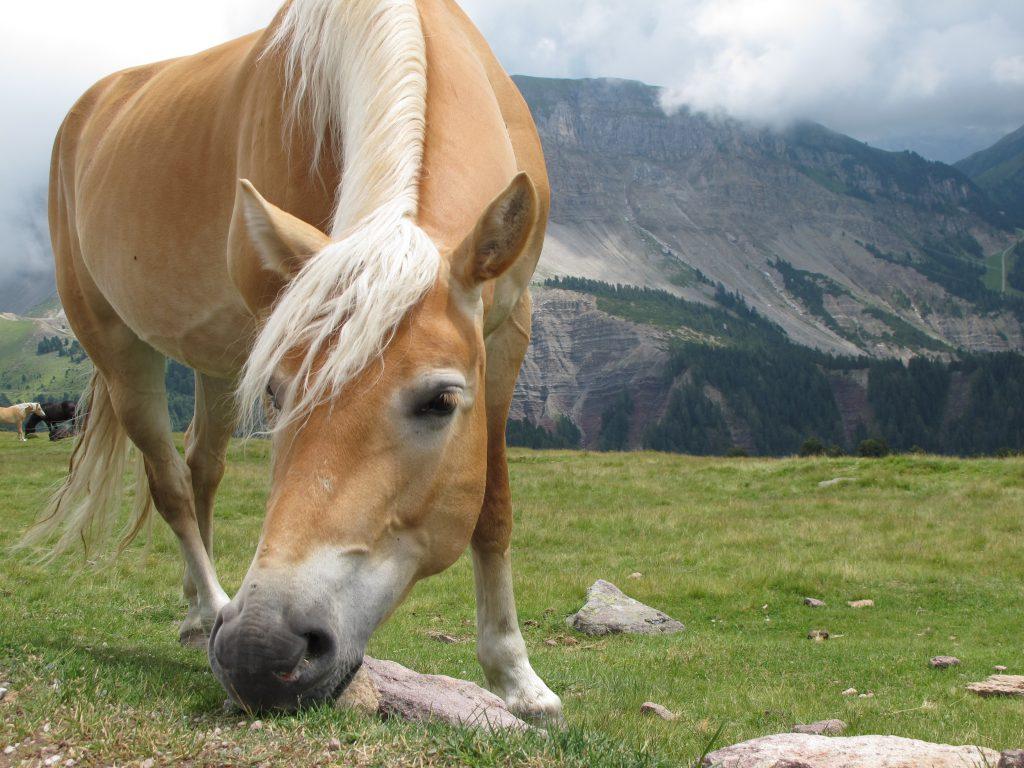 9 Gründe, warum wir von Südtirol nie genug bekommen