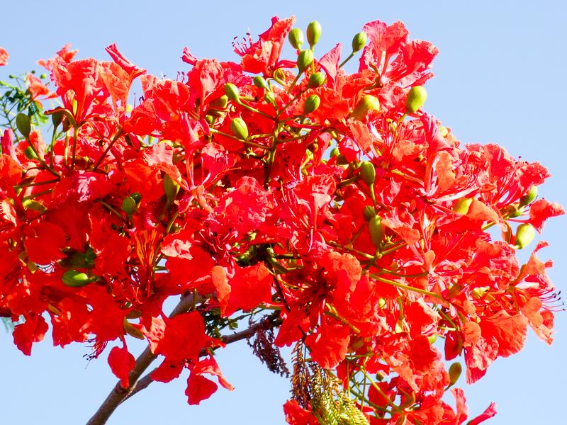 Blütenpracht Sansibar