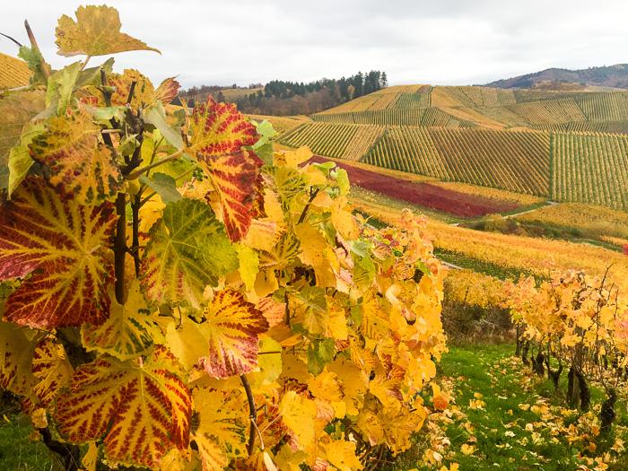 Durbach Wein