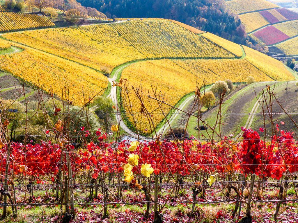 Genusswanderung Durbacher Weinpanorama