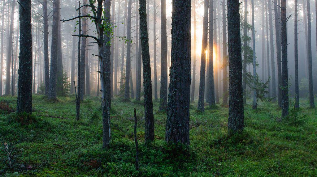 Foto:  ©Sven Zacek, Visit Estonia