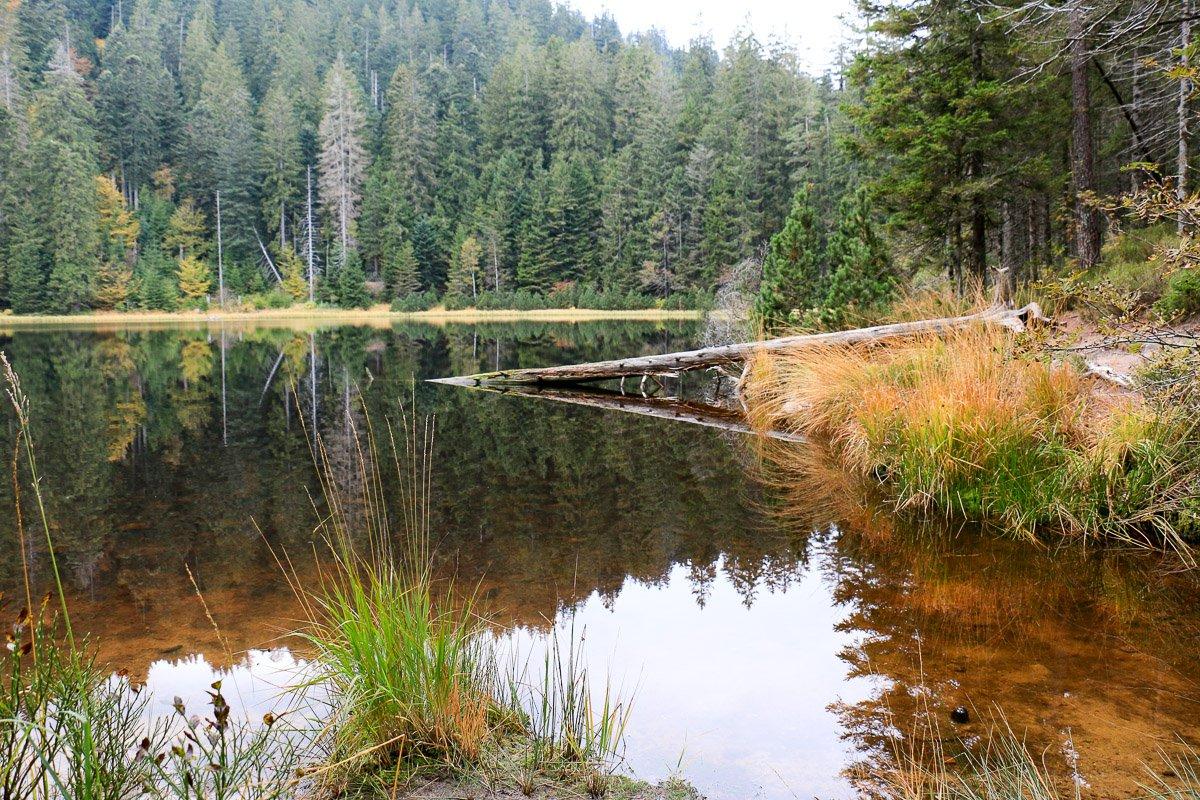 Der wilde See im Nationalpark Schwarzwald