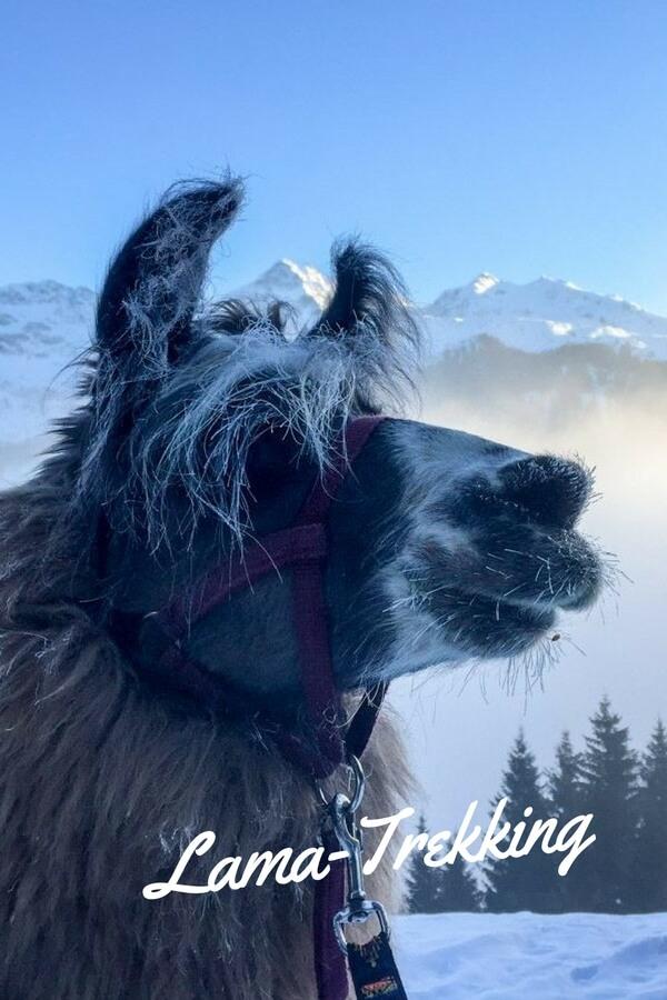 Lama-Trekking ist mehr als wandern. Der Weg wird zum Ziel, die Natur rückt näher. Fast schon meditativ wirkt so eine Tour mit den freundlichen Tieren.
