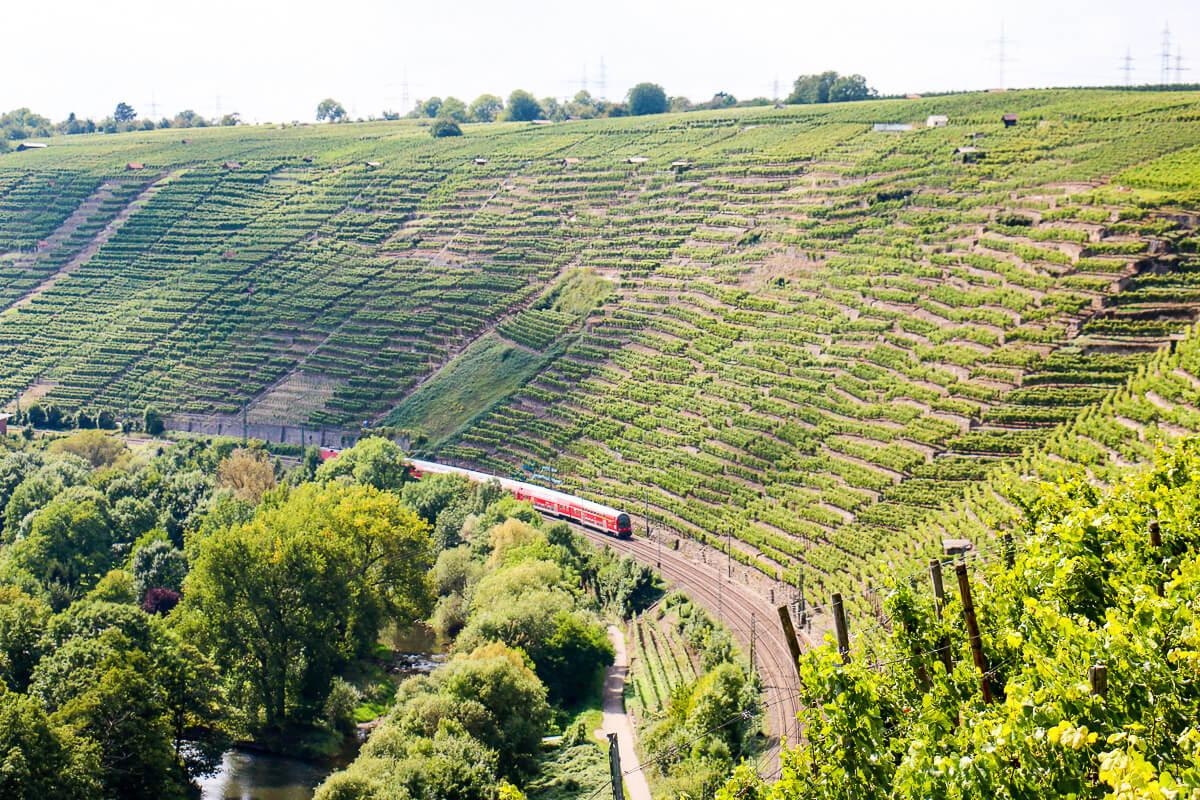 """Blick auf die Steillagen im Stuttgarter Umland, (gewählt zur """"Schönsten Weinsicht 2012"""", Walheim)"""