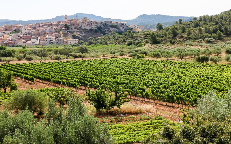 Katalonien, Weinberge
