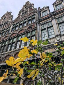 Feigenbaum in Gent