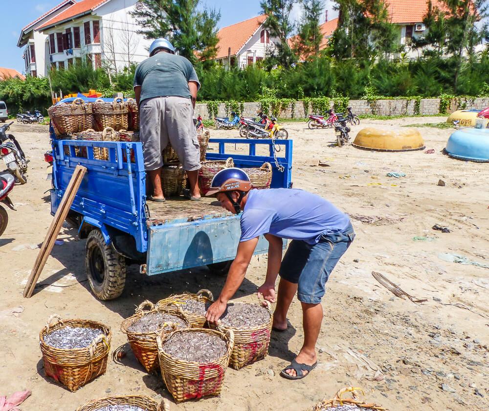 Der frische Fang wird am Hafen von Mui Ne verladen #muine #vietnam #fernreise #delicious_travel
