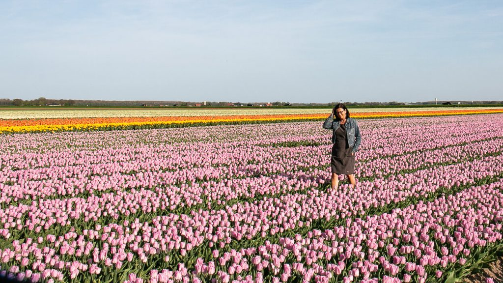 Besondere Erlebnisse entlang der Tulpenroute in Flevoland