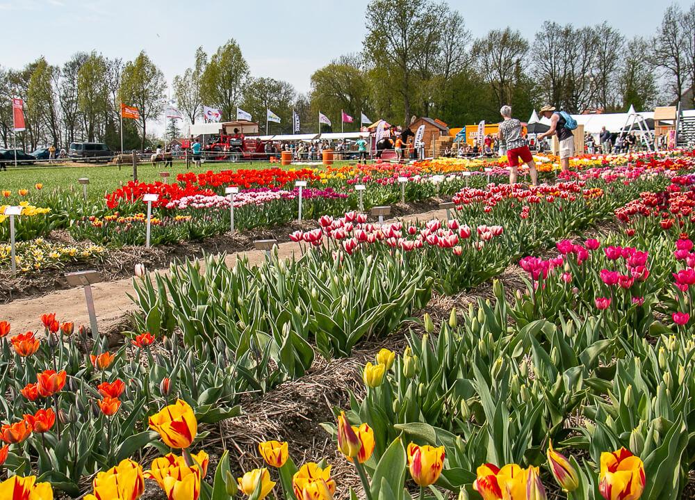 Tulpenerlebnisfeld Flevoland