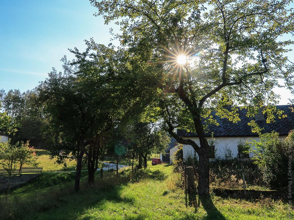 Streuobstwiese im Waldviertel