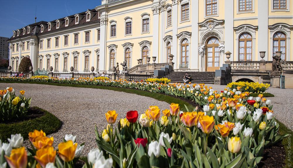 Frühlingserwachen: Blühendes Barock in Ludwigsburg