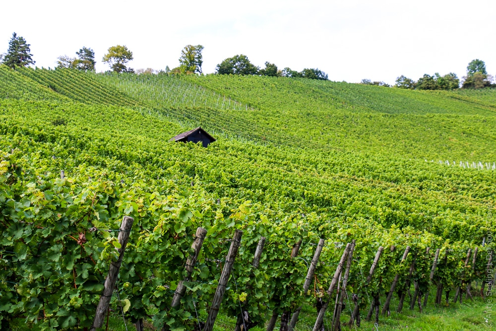Stuttgarter Weinwanderweg am Rotenberg