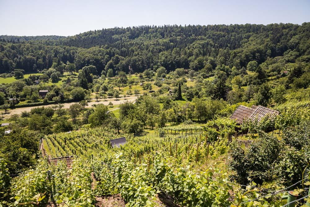 Wein- und Naturschutzgebiet Feinau