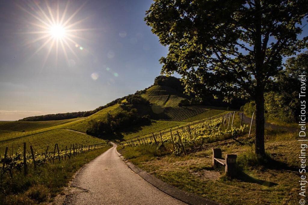 Handthal vineyards