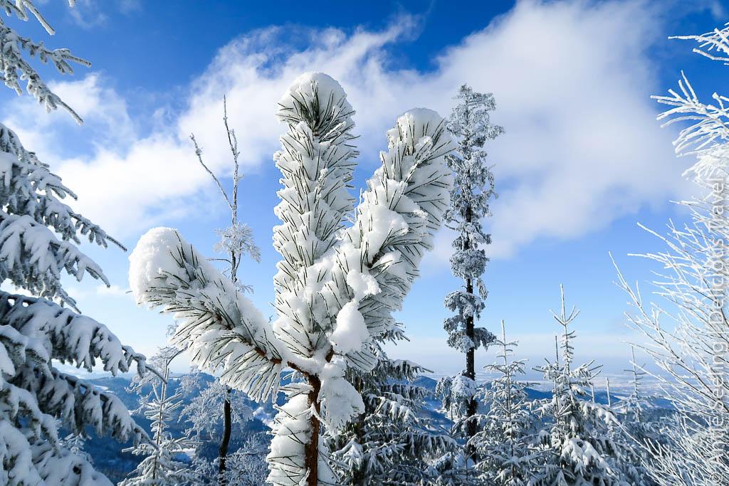 Wintermärchen auf der Alb