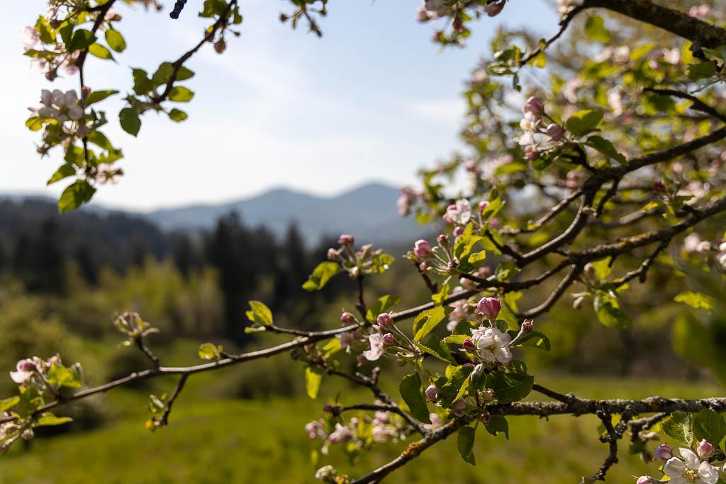 Streuobstwiesen Ausflugsziele Baden-Württemberg